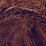 brun guillevic sur papier OSER LA ROSE