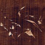 Un lapin la tête haute : brun guillevic sur papier